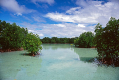 Lagoon, Indonesia