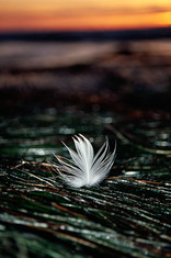 Feather and Sea Grass