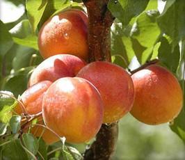 Orangered.jpg