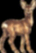 Roe-deer.png