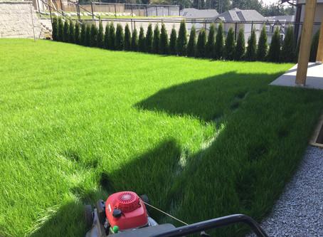 Lawnmower- Gas vs Electric