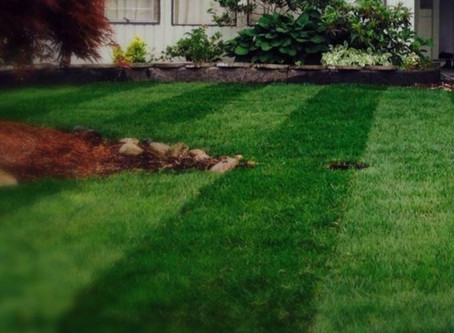 Lawn Weeds control