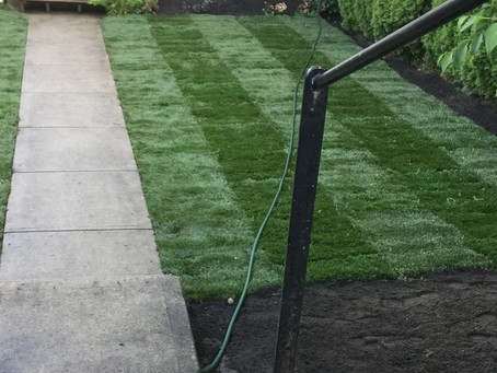 How to maintain newly installed grass
