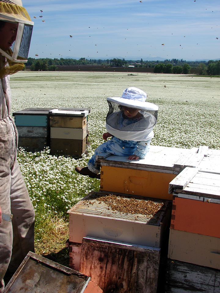 Beetanical Apiary pollination