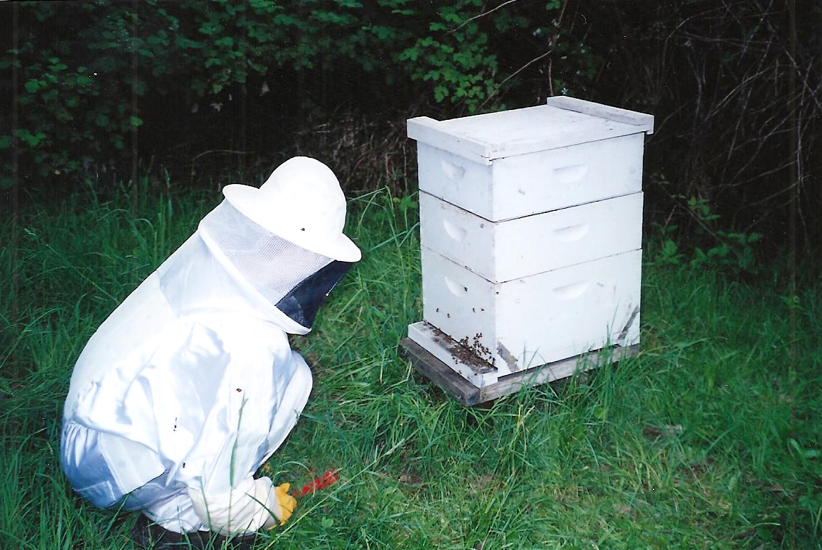 Our very first hives - Beetanical