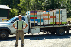 Supers loaded to expand hives