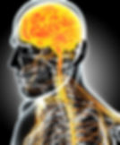 système_neurologique_.jpg
