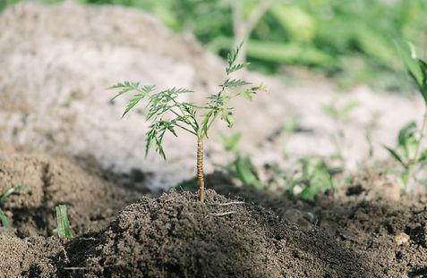 One Tree Planted096.jpg
