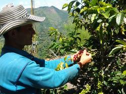 Coopérative La Cristalina - Colombie