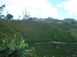 Plantation de La Cristalina