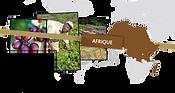 Carte Afrique - Les Cafés Lucor