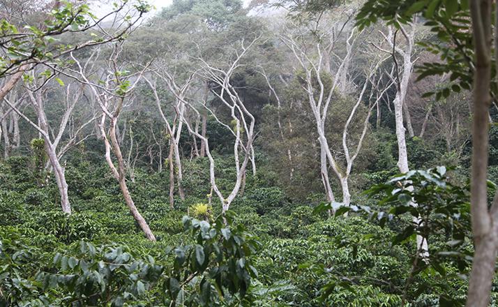 plantation_3