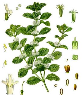 herb1.png