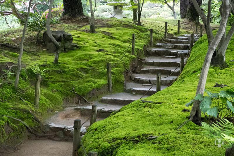 Japon: 5 jardins incontournables pour la photographie de paysages