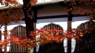 Japon - Kyoto (automne)