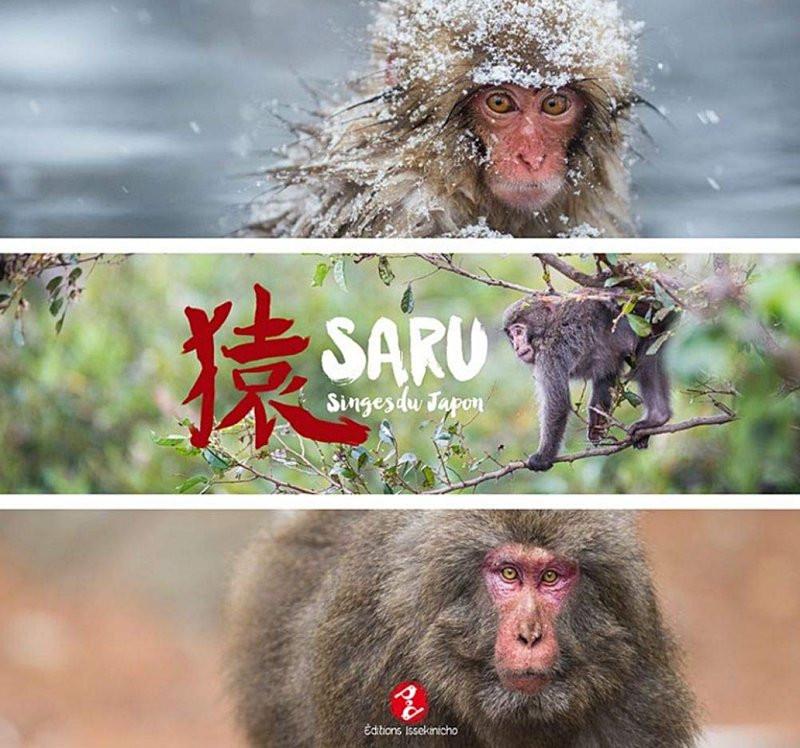 Saru - Singes du Japon - Nagano