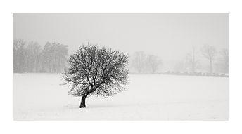 Arbre dans la neige. Tirage Fine Art 30x60 cm | Olivier Robert