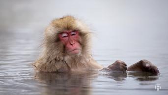Japon: Se rendre à Nagano et photographier les Snow Monkeys au Parc Jigokudani