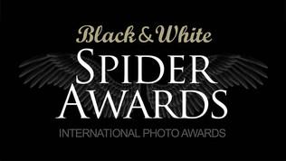 Black & White Spider Awards, 16ème édition, 2021