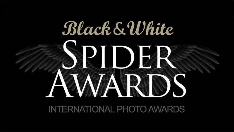 Black and White Spider Awards 2021