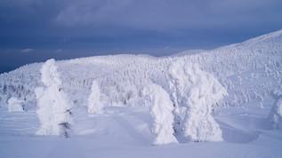 Japon: Se rendre à Aomori et photographier les Snow Monsters