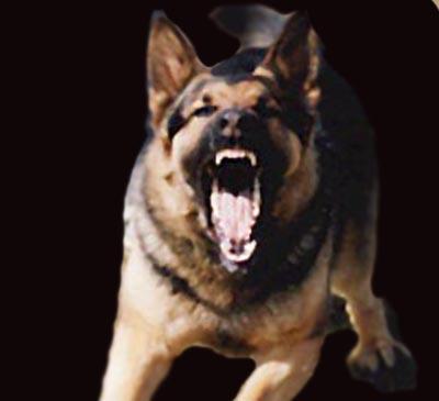 Protection Jago attack2.jpg
