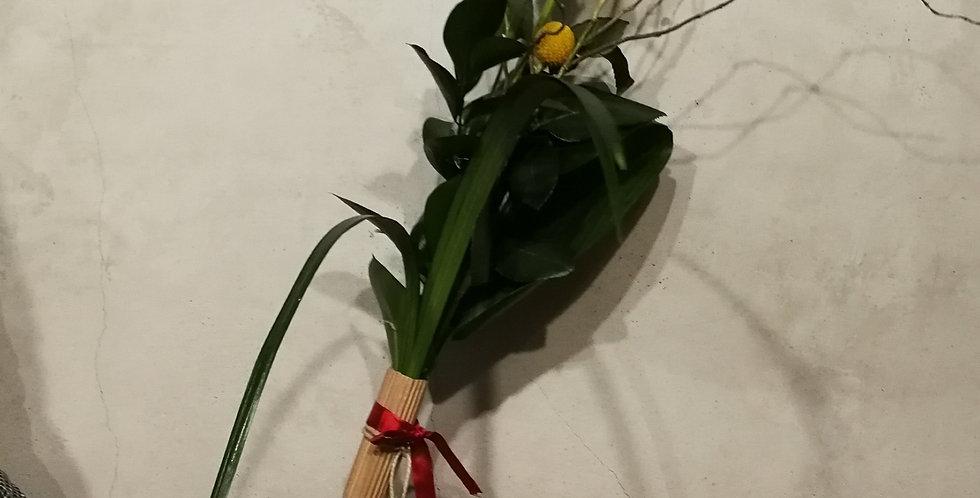 Rosa Sant Jordi nature