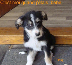 roxy bebe