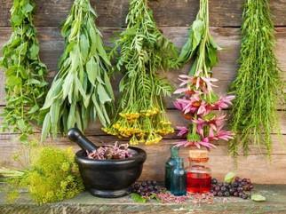 Make your own medicinal herb garden
