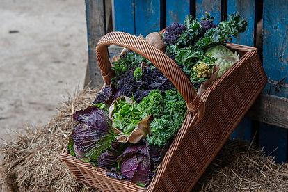 White_Row_Farm_Home_Grown-7917.jpg