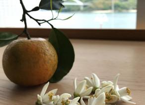 植物観察日記【第11回】ネロリ