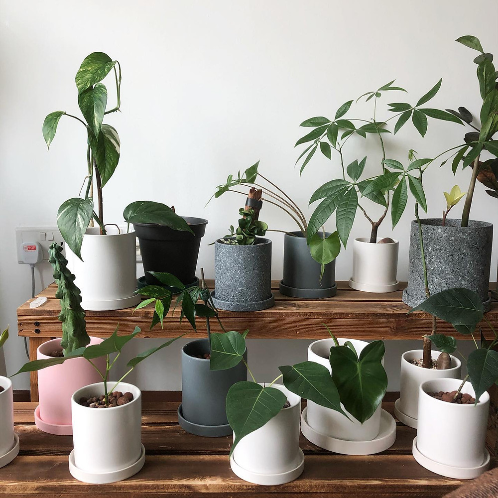 House Plants During COVID-19 Lockdown