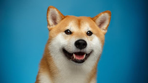 Dogecoin Cryptocurrency Price plunged
