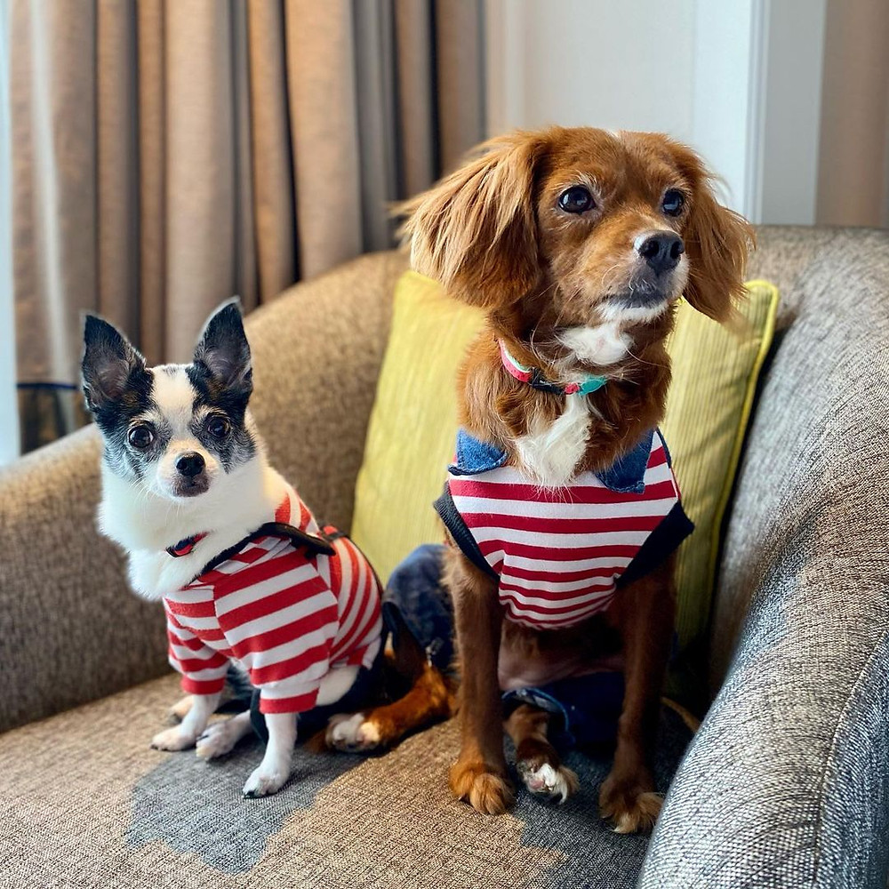 Pet-Friendly Hotels for a 'Petcation' in Singapore