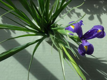 Early Springtime