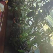 live plants 5.jpg