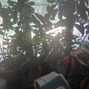 Live plants 2.jpg