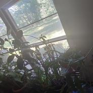 live plants 3.jpg