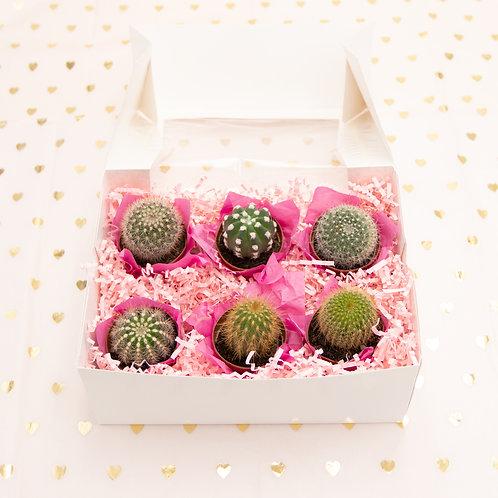 Sweet Six Cactus Box