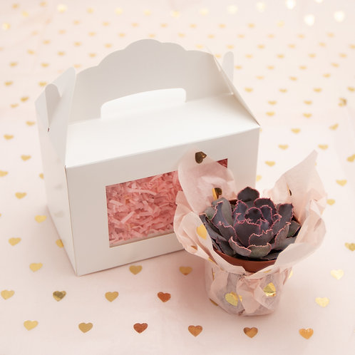 Sweetheart Succulent Box