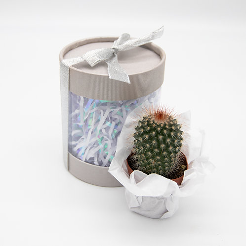 Silver Sweets Cactus Box