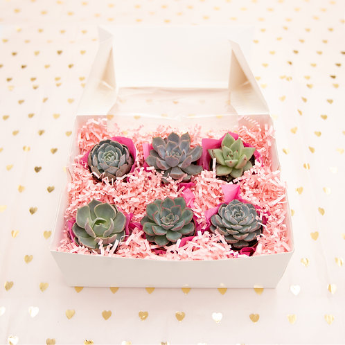 Sweet Six Succulent Box