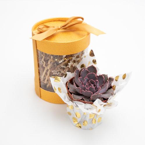 Golden Dream Succulent Box