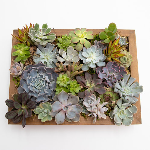 Picture Perfect Succulent Frame