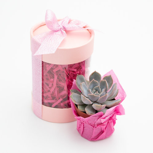 Perfectly Pink Succulent Box
