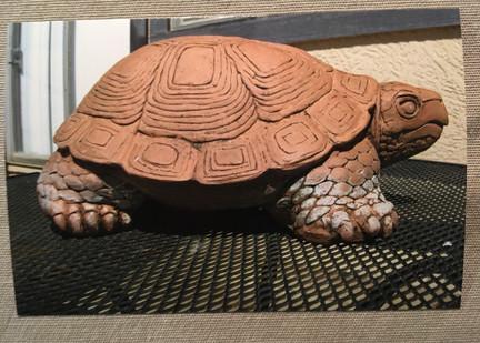 __Turtle__.jpeg