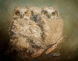 Owls_CjN