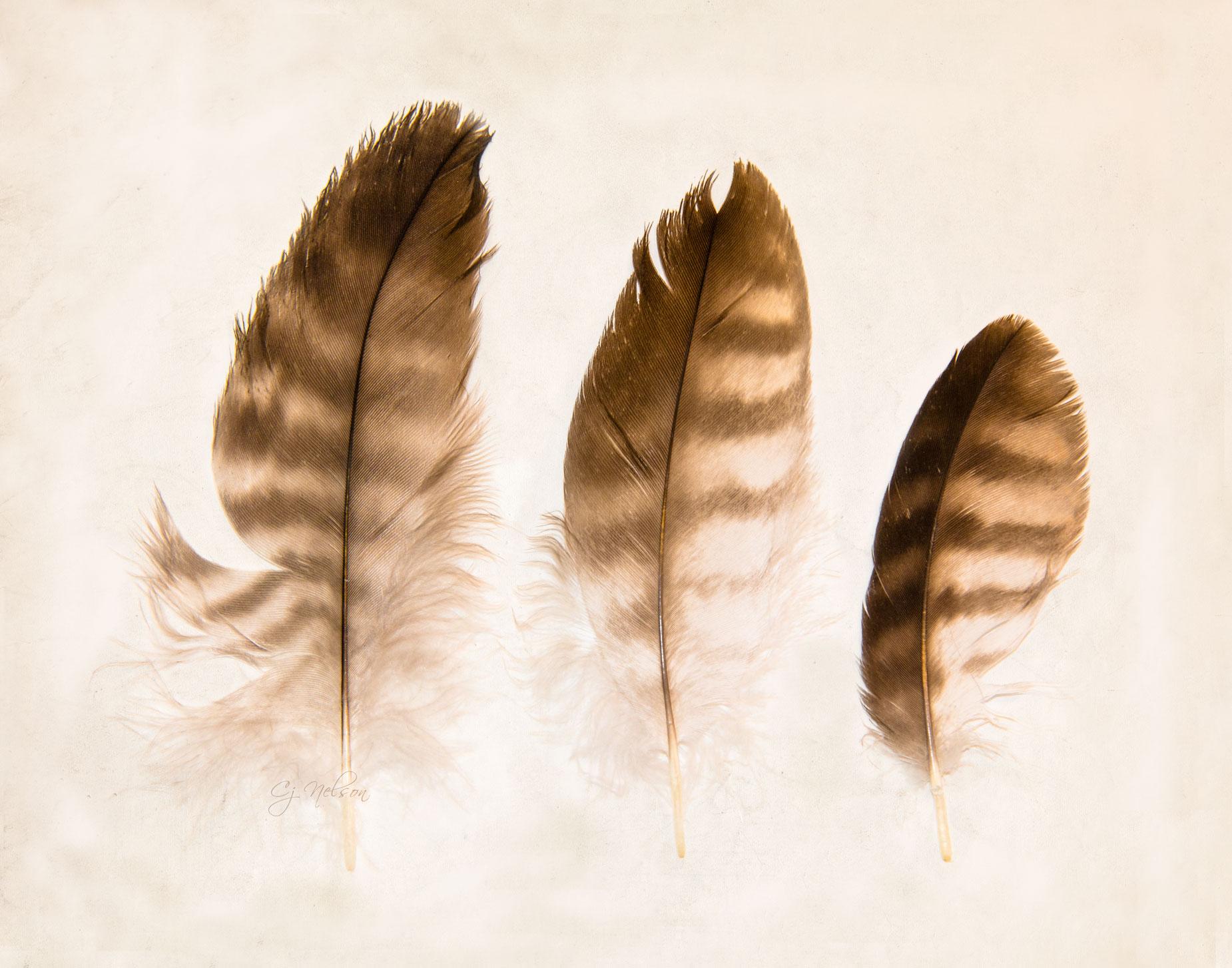 FeatherTrio_CjN