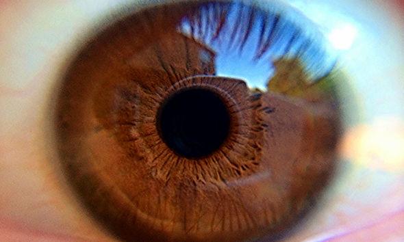 Kahverengi Göz closeup