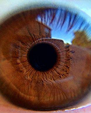 Brown Close up do olho